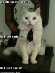 jobinterview Cat